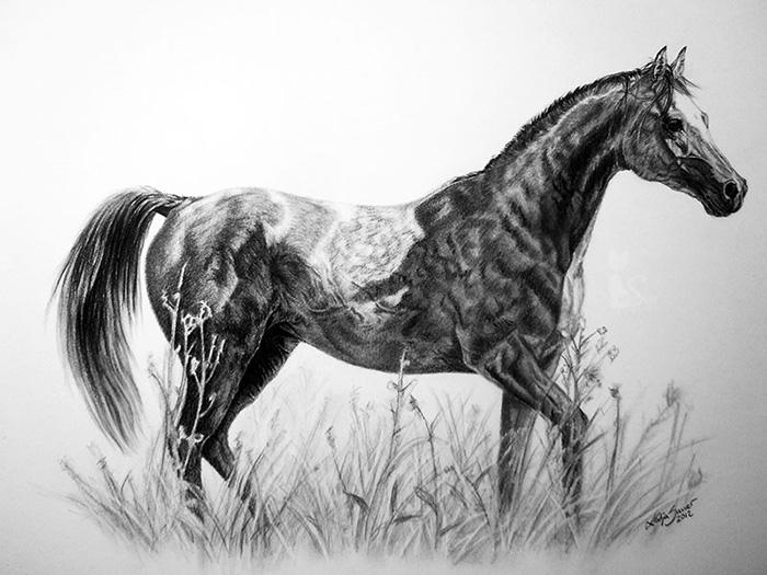 Pferdezeichnungen und Tierportraits in Kohle und Graphit - PRINIK KOSSAK (30 cm x 40 cm)