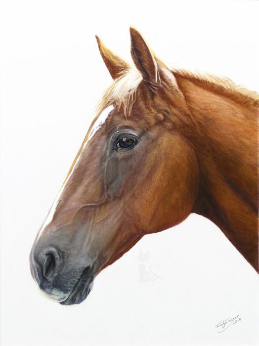 Pferdeportraits und Tierportraits in Pastellkreide - SARINA (30 cm x 40 cm)