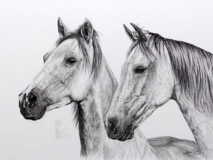 Pferdezeichnungen und Tierzeichnungen in Kohle und Graphit - Collage SELECTRO und ZARO (30 cm x 40 cm)