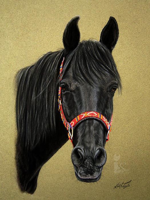 Pferdezeichnungen und Tierportraits in Pastellkreide - Shagya Araber SHAHIN (24 cm x 32 cm)