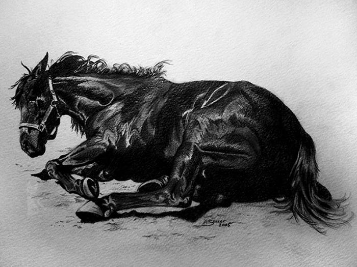 Pferdezeichnungen und Pferdeportraits in Kohle und Graphit - Shagya Araber SHAHIN (21 cm x 30 cm)