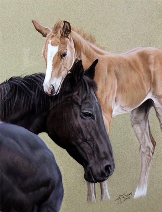 Tierzeichnungen und Pferdeportraits in Pastellkreide - Quarter Horses TENISEE GLO und FRECKLES MYSTERY GLO (24 cm x 32 cm)