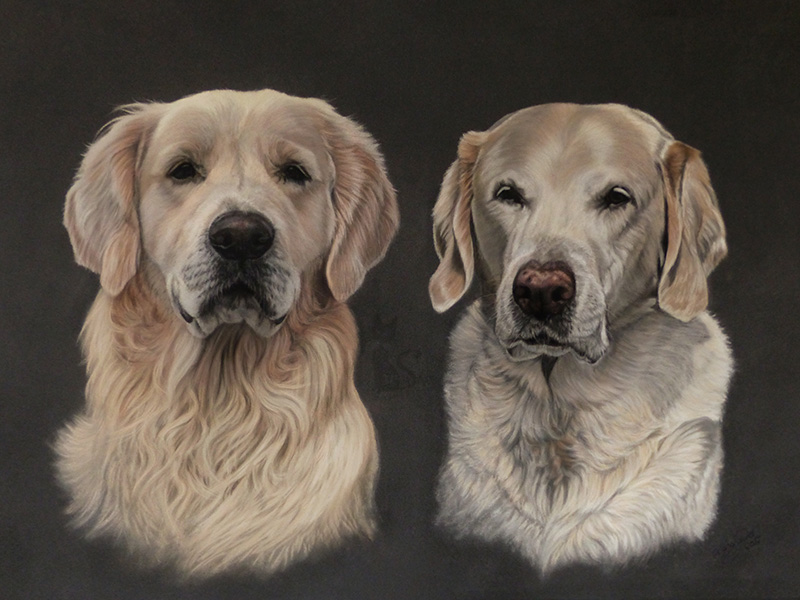 Golden Retriever RICKY und Golden Labrador CARO - Collage in Pastellkreide (50 cm x 70 cm)