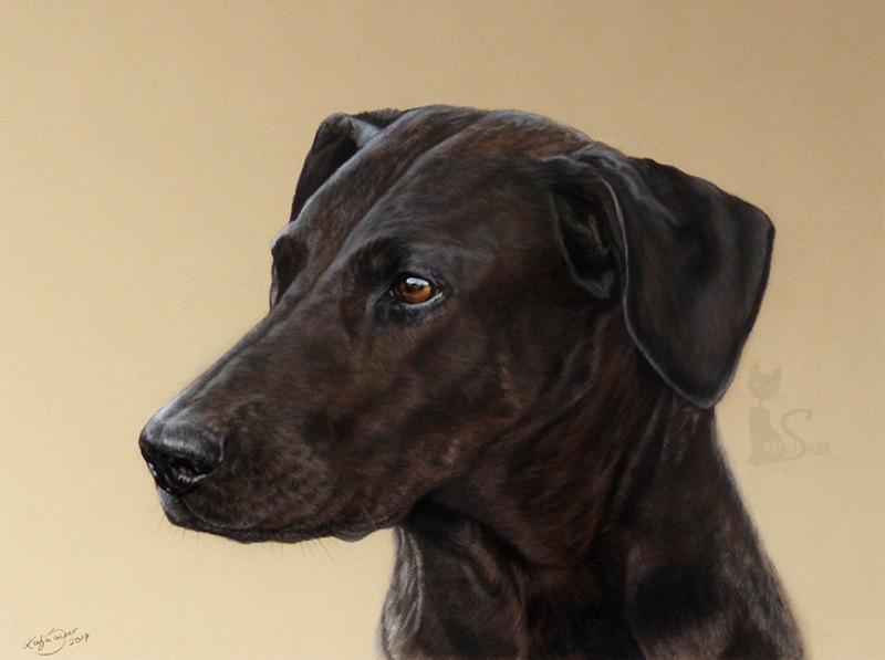 Dobermann-Dogge Mischlingshündin LUNA in Pastellkreide (30 cm x 40 cm)