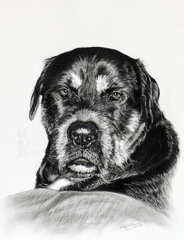 Mastiff-Rottweiler-Mix ROCKY in Kohle und Graphit (21 cm x 30 cm)