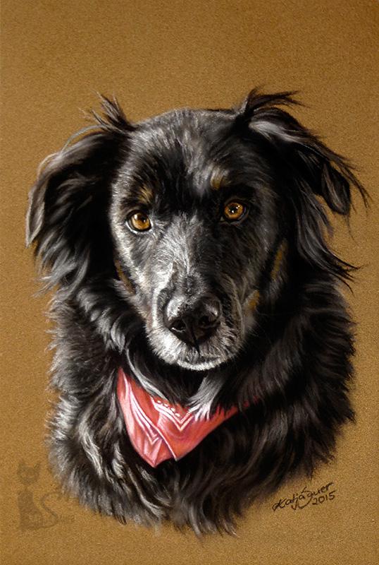 Berner Sennen-Schäferhund-Mischling BONZO in Pastellkreide (16 cm x 24 cm)