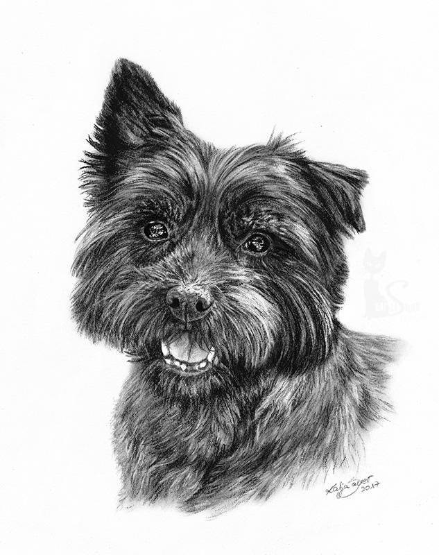 Cairn Terrier TEDDY in Kohle und Graphit (21 cm x 30 cm)
