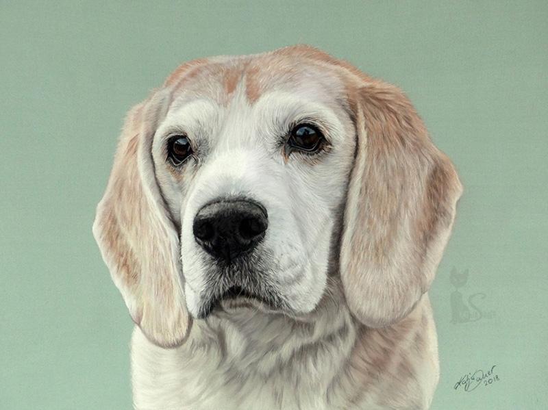 Beagle TAILOR in Pastellkreide (24 cm x 32 cm)
