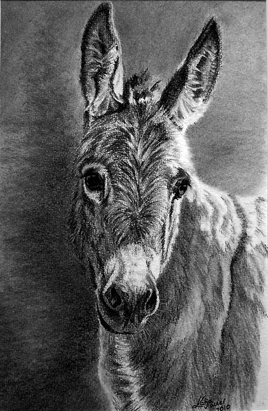 Tierzeichnungen und Tierportraits in Kohle und Graphit - Zwergesel (21 cm x 30 cm)