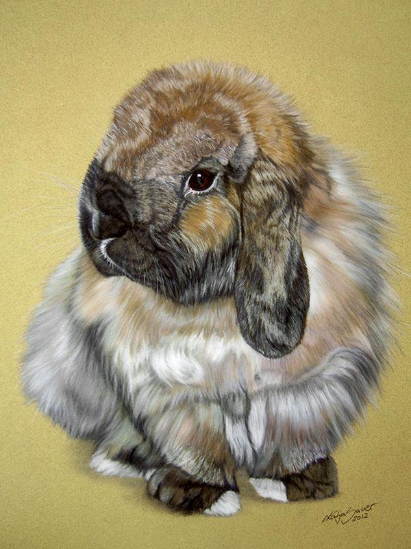 Tierzeichnungen und Tierportraits in Pastellkreide - Widderzwerg MÄXCHEN (30 cm x 40 cm)