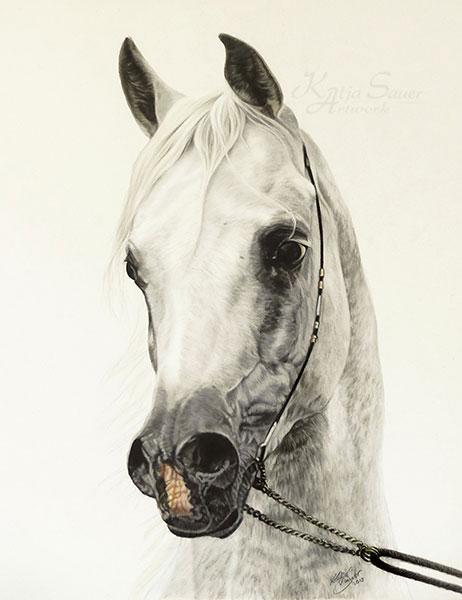 Fine Art Print EL THAY MASHOUR  - Tierzeichnungen und Tierportraits in Pastellkreide  von Katja Sauer