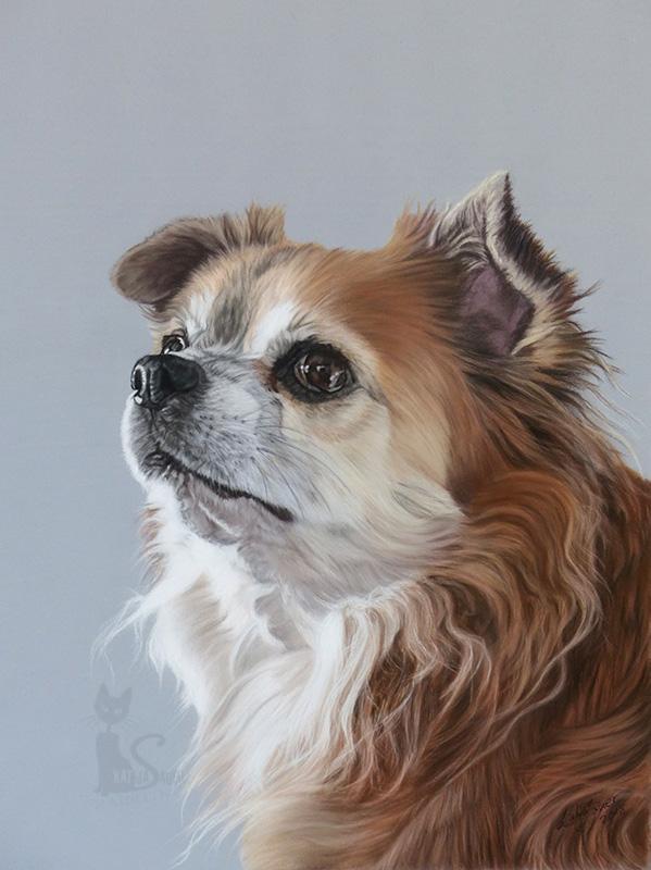Chihuahua BENJY in Pastellkreide (30 cm x 40 cm)