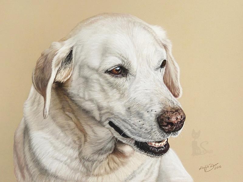 Labrador Hündin SHEELA in Pastellkreide (30 cm x 40 cm)