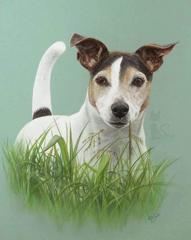 Jack Russell Terrier SPENCER in Pastellkreide (40 cm x 50 cm)