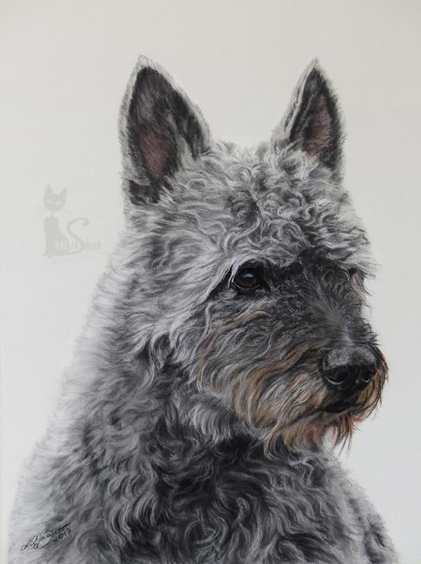 Rauhaar Holländer YARIK in Pastellkreide (24 cm x 32 cm)