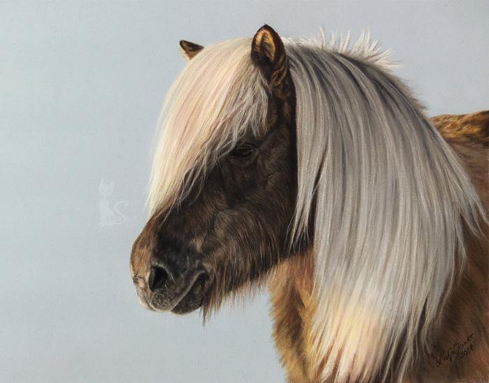 Pferdeportraits und Tierzeichnungen in Pastellkreide - Islandpferd HLÀKA (24 cm x 32 cm)