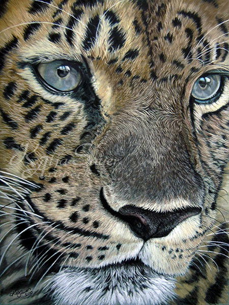 Fine Art Print LEOPARD  - Tierzeichnungen und Tierportraits in Pastellkreide  von Katja Sauer