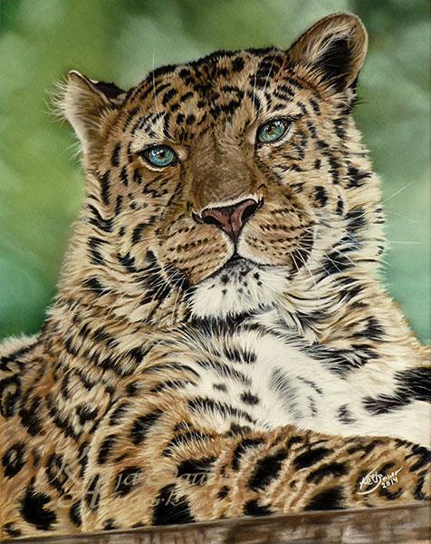 Fine Art Print AMUR LEOPARD - Tierzeichnungen und Tierportraits in Pastellkreide  von Katja Sauer