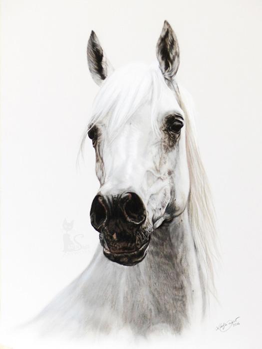 Tierzeichnungen und Pferdeportraits in Pastellkreide - Araberstute ESTOPA (40 cm x 50 cm)