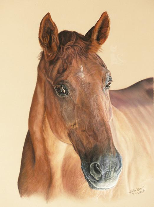 Tierzeichnungen und Pferdeportraits in Pastellkreide - WENDELIN (30 cm x 40 cm)
