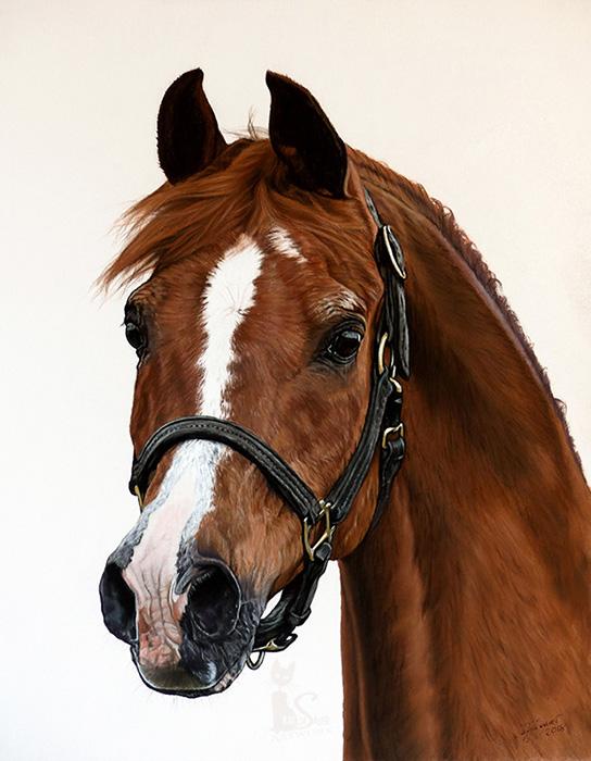 Tierzeichnungen und Pferdeportraits in Pastellkreide - Araberhengst PADRONS PSYCHE (40 cm x 50 cm) / Danke Stuart Vesty