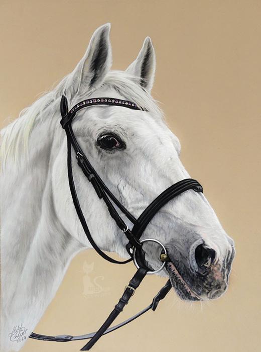 Pferdezeichnungen und Tierportraits in Pastellkreide - IKARUS (30 cm x 40 cm)