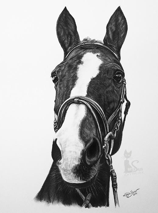 Pferdezeichnungen und Tierportraits in Kohle und Graphit - SELLY (30 cm x 40 cm)