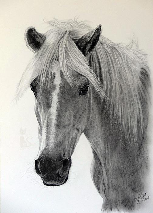 Tierzeichnungen und Pferdezeichnungen in Kohle und Graphit - Haflinger STARLIGHT (21 cm x 30 cm)