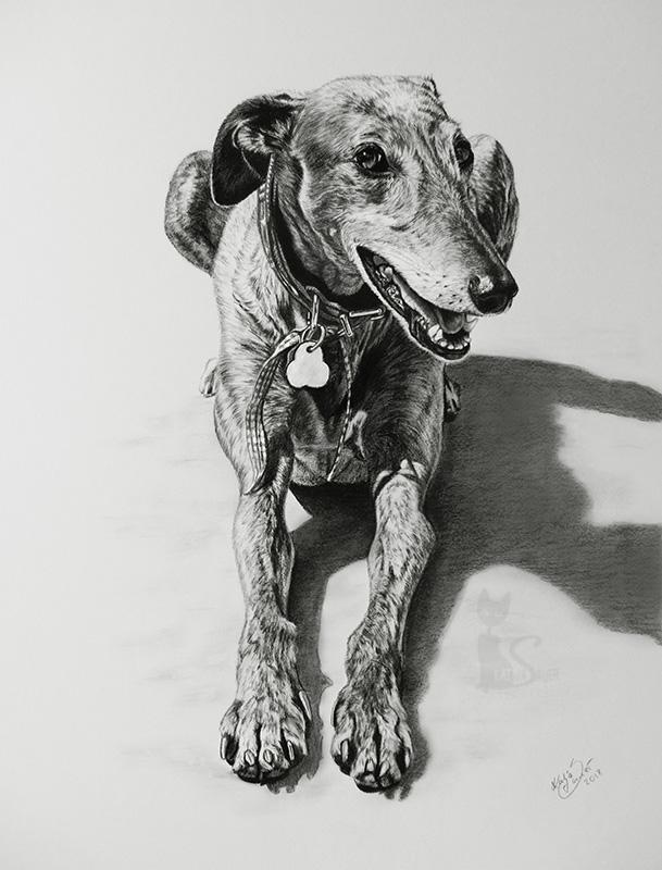 Galgo MUMMEL in Kohle und Graphit (40 cm x 50 cm)