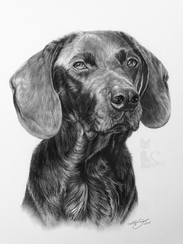 Labrador-Bayerischer Gebirgsschweißhund  BOBBY in Kohle und Graphit (30 cm x 40 cm)