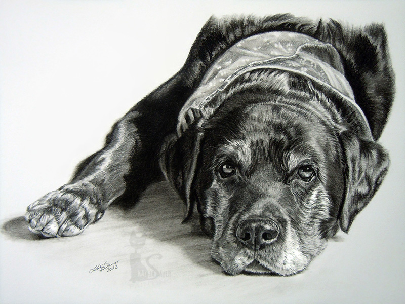 Labrador ENZO in Kohle und Graphit (21 cm x 30 cm)