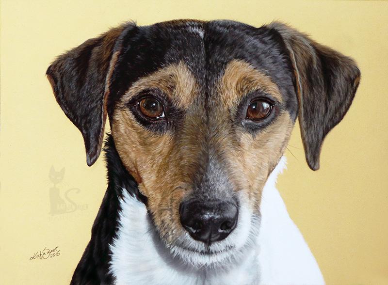Jack Russell Terrier BOBBY in Pastellkreide (24 cm x 32 cm)