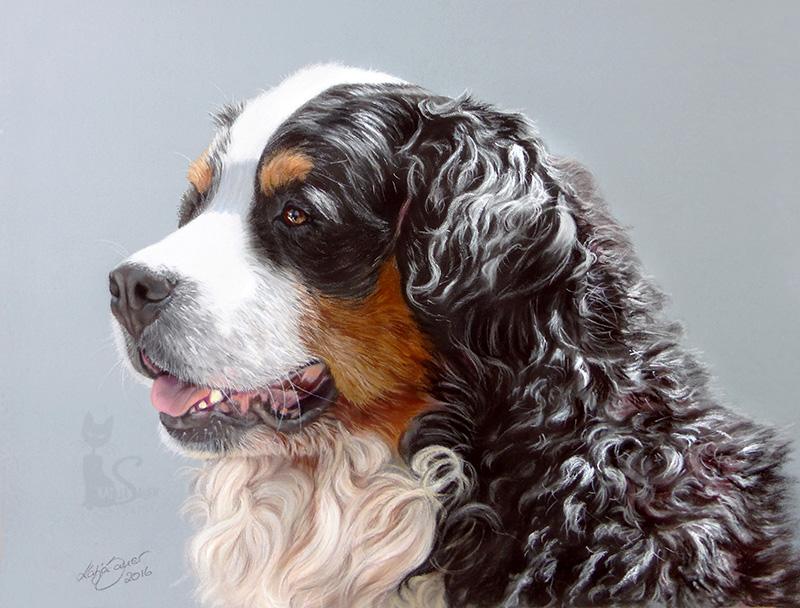 Berner Sennenhund FINO in Pastellkreide (24 cm x 32 cm)
