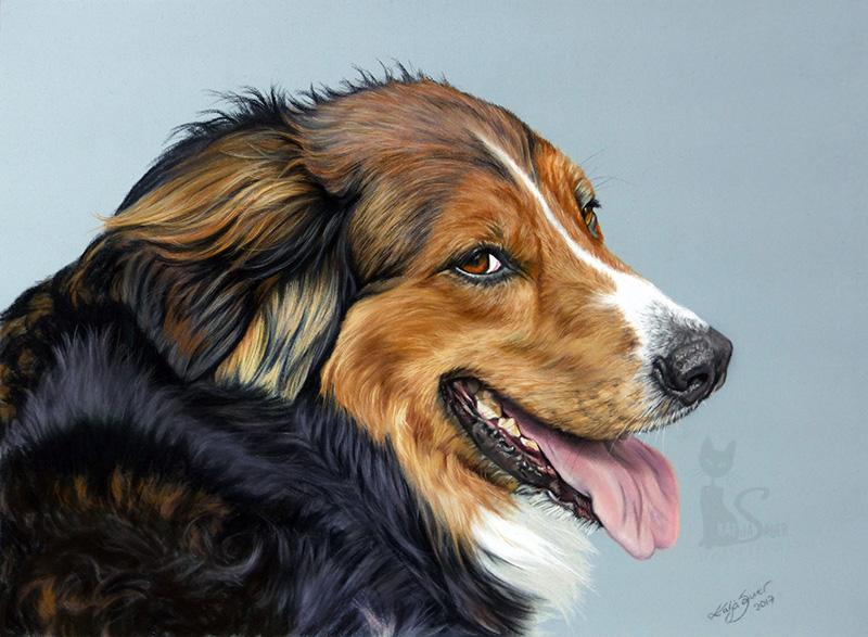 Mischlingshund KALLI in Pastellkreide (30 cm x 40 cm)