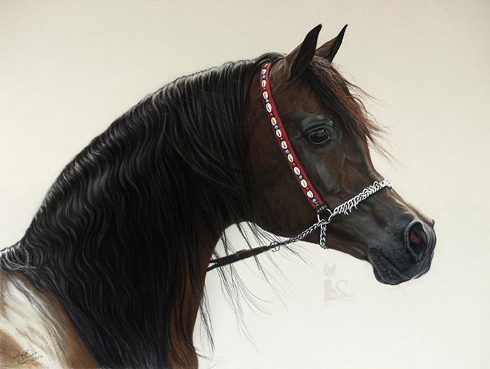 Tierzeichnungen und Pferdeportraits in Pastellkreide - Araberhengst GAZAL AL SHAQAB (40 cm x 50 cm) / Danke Gregor Aymar