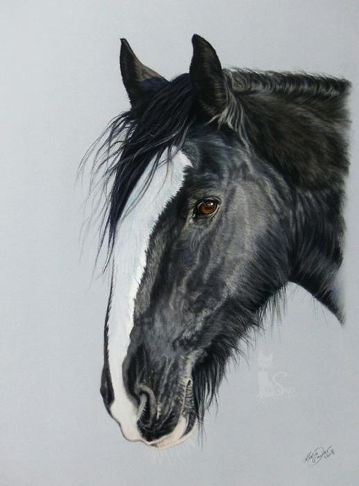 Tierzeichnungen und Pferdeportraits in Pastellkreide - Shire Horse PEPPI (30 cm x 40 cm)