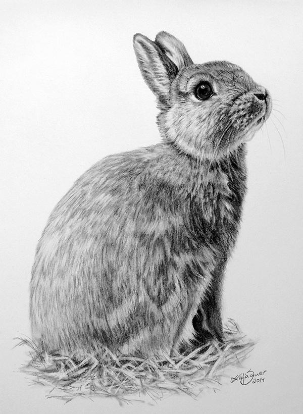 Tierzeichnungen und Tierportraits in Pastellkreide - Zwergkaninchen EMMA (21 cm x 30 cm)