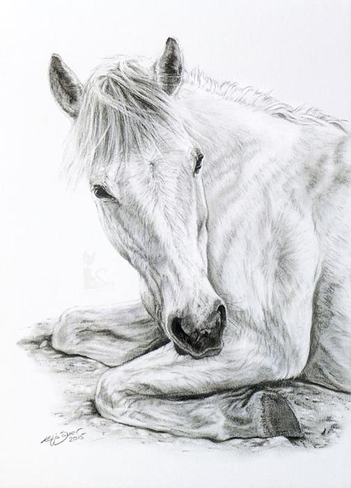 Tierzeichnungen und Pferdeportraits in Kohle und Graphit - VICKY (21 cm x 30 cm)