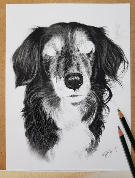 Ausarbeitung Hund in Graphit und Kohle
