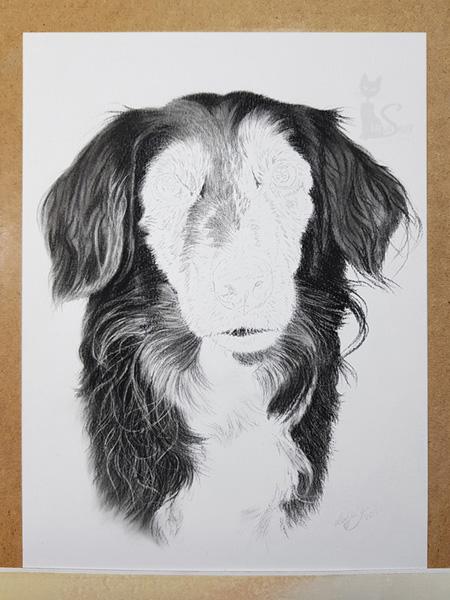 Ausarbeitung Hund in Kohle gezeichnet