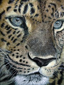 Leopard Tierportraits und Tierzeichnungen in Pastellkreide von Katja Sauer