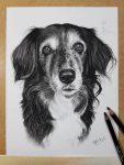 Tierportrait Hundezeichnung in Kohle und Graphit gemalt nach Fotovorlage