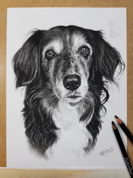 Tierportrait in Kohle Hundezeichnung gemalt nach Fotovorlage