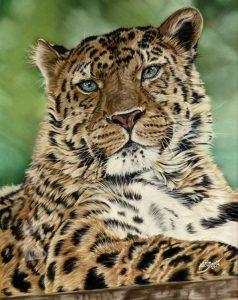Tierportraits in Pastellkreide Leopard Tierzeichnungen von Katja Sauer
